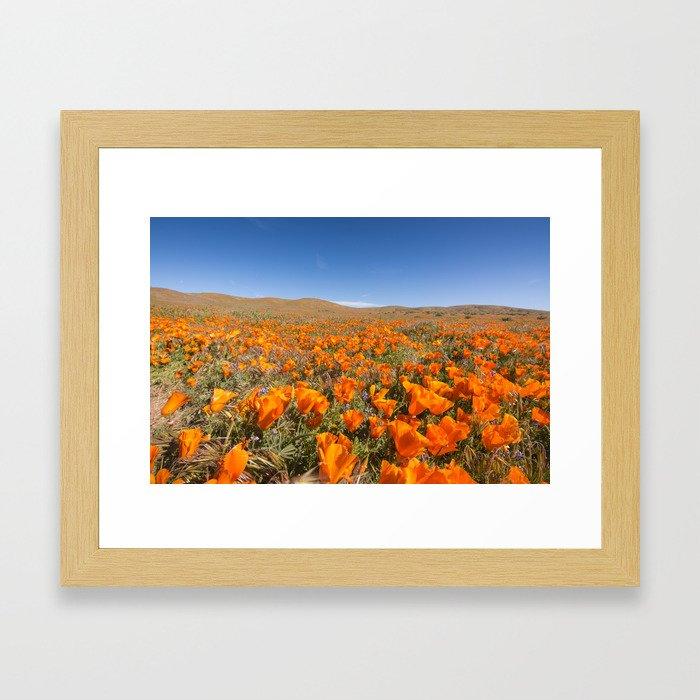 Blooming poppies in Antelope Valley Poppy Reserve Framed Art Print