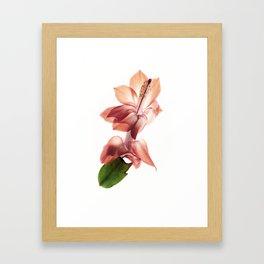 Schlumbergera Framed Art Print