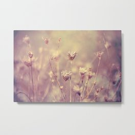 Winter Queen Anne's Lace  Metal Print