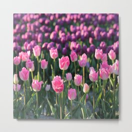 Purple and Pink Tulips Metal Print