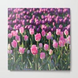 Purple and Pink Tulips Metal Print