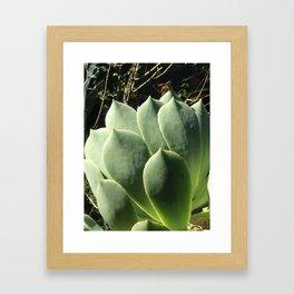 Aeonium lancerottense succulent Framed Art Print