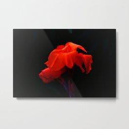 Orange Indian Reed Lily Flower Metal Print