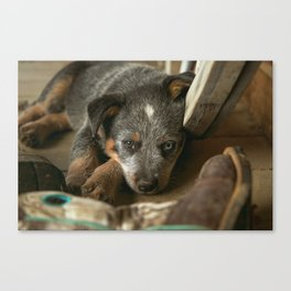 A Western Pup Canvas Print