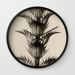 Karl Blossfeldt, Acanthus mollis Wall Clock