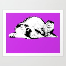 Sleepy Long Hair Chihuahua Art Print