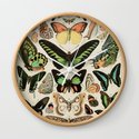 Papillon II Vintage French Butterfly Chart by Adolphe Millot by danieljohndesign