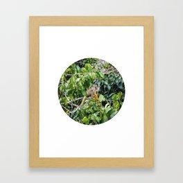 Monkey in a Tropical Jungle Circle Fine Art Print Framed Art Print