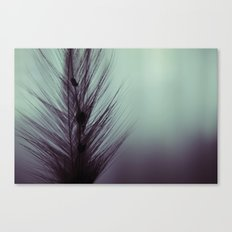 Feather's beauty. Canvas Print