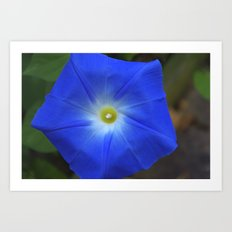 Blue, Heavenly Blue morning glory Art Print
