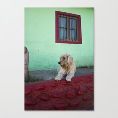 White Dog, Blue House Canvas Print