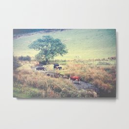 THE COWS COME HOME (everyday 06.01.2017) Metal Print