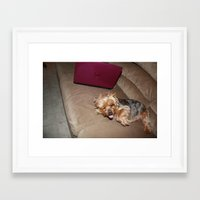 yorkie Framed Art Prints featuring little yorkie by Audrey's Photography