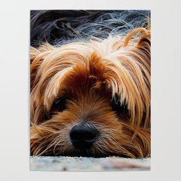 Cute Dog Puppy Yorkie Poster
