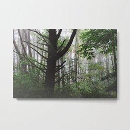 Forest Trail XLI Metal Print