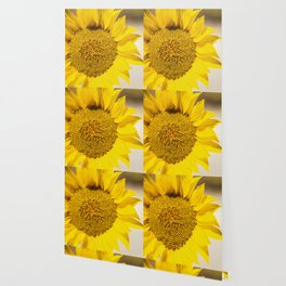 Sunflower (Helianthus Anuus) in the morning sun is a sign of the bright colors of Summer. Wallpaper