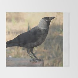 Side View Of A Wild Jackdaw Throw Blanket
