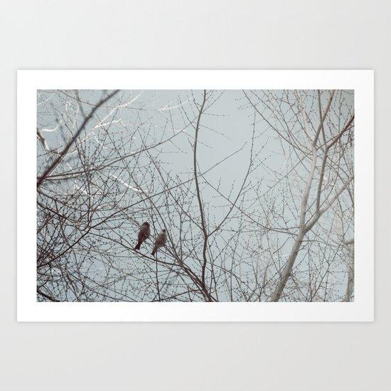 city bird Art Print