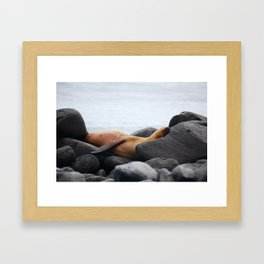 Galapagos Sea Lion Framed Art Print