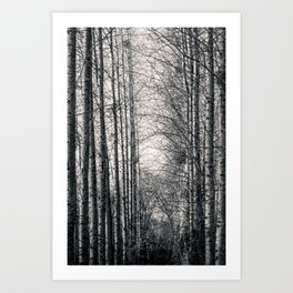 Poplars and the river. Art Print
