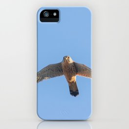 Common Kestrel (Falco tinnunculus). Common Kestrel in flight iPhone Case