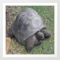 tortoise Art Prints featuring tortoise by shannon's art space