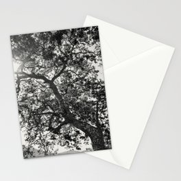 Tree Reaching For Light Stationery Cards
