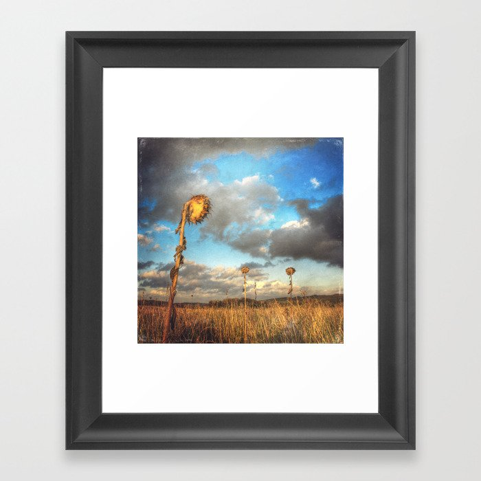 Field of lost Souls - Withered Sunflowers Framed Art Print