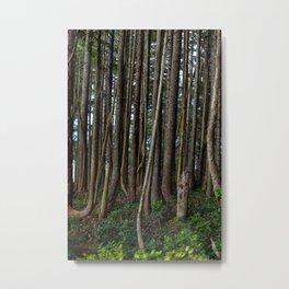 Cape Flattery Trees 2 Metal Print