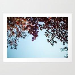 Japanese Maple Leaves in Autumn Art Print