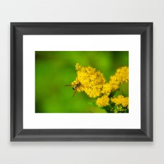 Paper Wasp - Yellow Flowers Framed Art Print