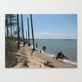 Chesapeake Bay Drift Wood Canvas Print