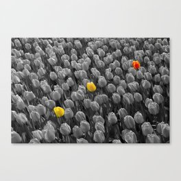 Tulips [Colour on Black and White] Canvas Print