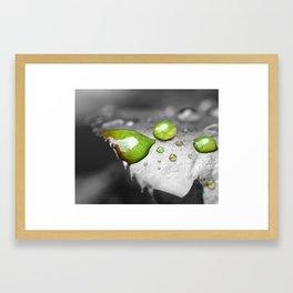 Rose Leaf with Dew Framed Art Print