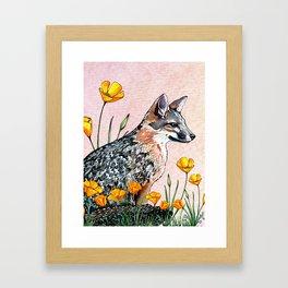 Channel Island Fox (Sunset Sky) Framed Art Print
