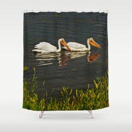 Pelicans in Edmonton - Hermitage Shower Curtain