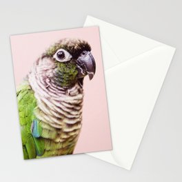 Parot Photography | Peek-a-boo | Tropical | Wildlife | Bird | Blush Pink Stationery Cards