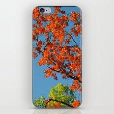 My Fall Leaves iPhone & iPod Skin