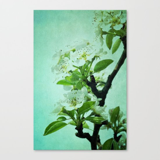 under the pear tree Canvas Print