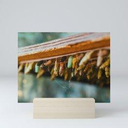 Butterfly Metamorphosis Photograph Mini Art Print