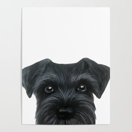 Black Schnauzer, Dog illustration original painting print Poster