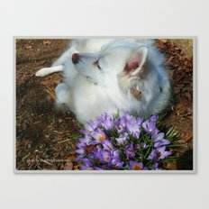 Sylvie Naps With the Crocuses  Canvas Print