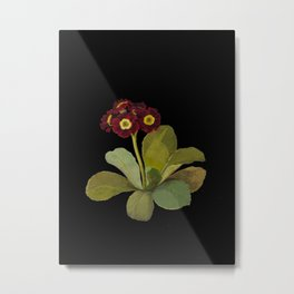 Primula Auricula  Mary Delany Delicate Paper Flower Collage Black Background Floral Botanical Metal Print