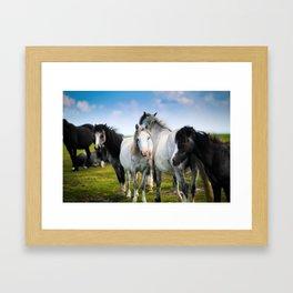 Horses Horses 4 Framed Art Print
