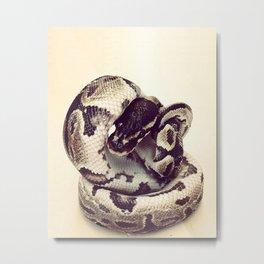 Ball Python | Snake Metal Print