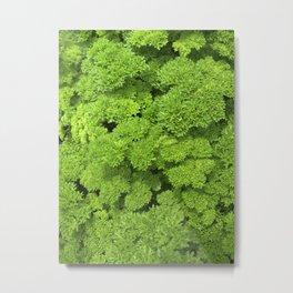 green garden herb II Metal Print