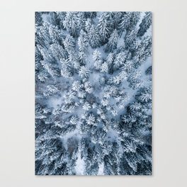 Winter Pine Forest Canvas Print