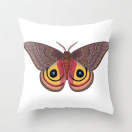 io moth (Automeris io) female specimen 1 Throw Pillow