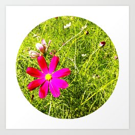 Wild Flowers (Circle) Art Print