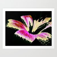 lily Art Prints featuring Lily by Vitta
